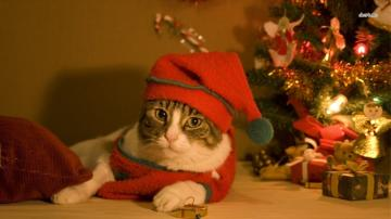 Christmas cat wallpaper   Animal wallpapers   12695