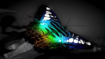 Colorful Butterfly Wallpapers 12 Cool Hd Wallpaper   Hivewallpapercom