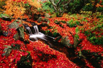 Wallpaper Views Red Leaves Beautiful Fall Landscapes HD Wallpapers