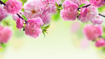1600x900 cute flower layout backgrounds for myspace pink