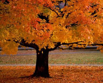 Trees Desktop Wallpaper or download Autumn Trees Desktop Wallpaper on