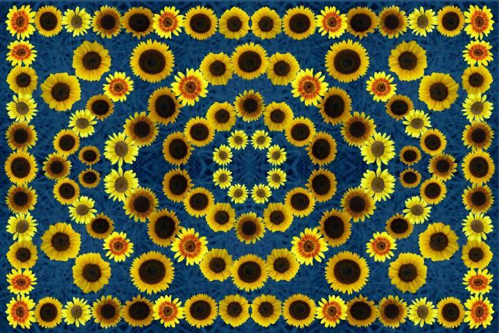 770x194px Sunflower Crocks Wallpaper Border