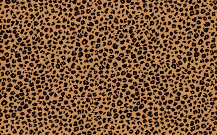 Cheetah Wallpaper Tumblr