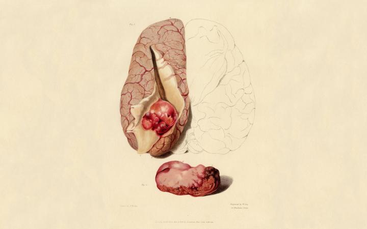800x600px Human Anatomy Wallpaper Wallpapersafari