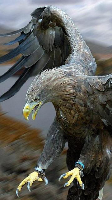 1440x900px Eagle Screensavers And Wallpaper Wallpapersafari