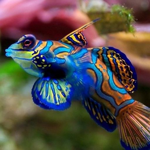 3d Aquarium Live Wallpaper: 578x435px Aquarium Live Wallpaper Windows 10