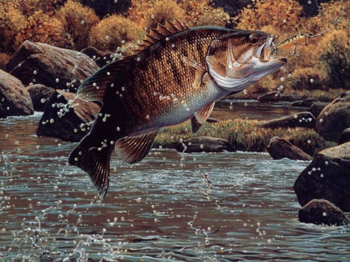 1680x1050px Largemouth Bass Wallpaper HD