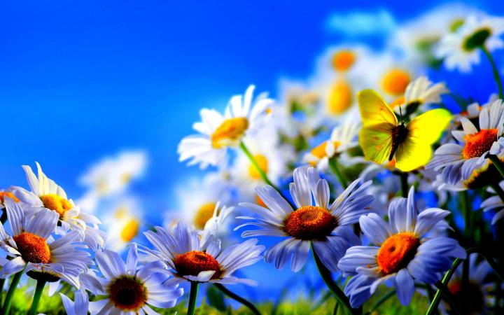 1680x1050px flowers wallpapers and screensavers wallpapersafari you mightylinksfo