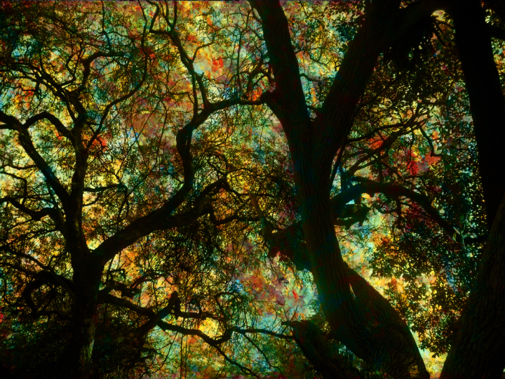 600x375px Trippy Nature Wallpaper