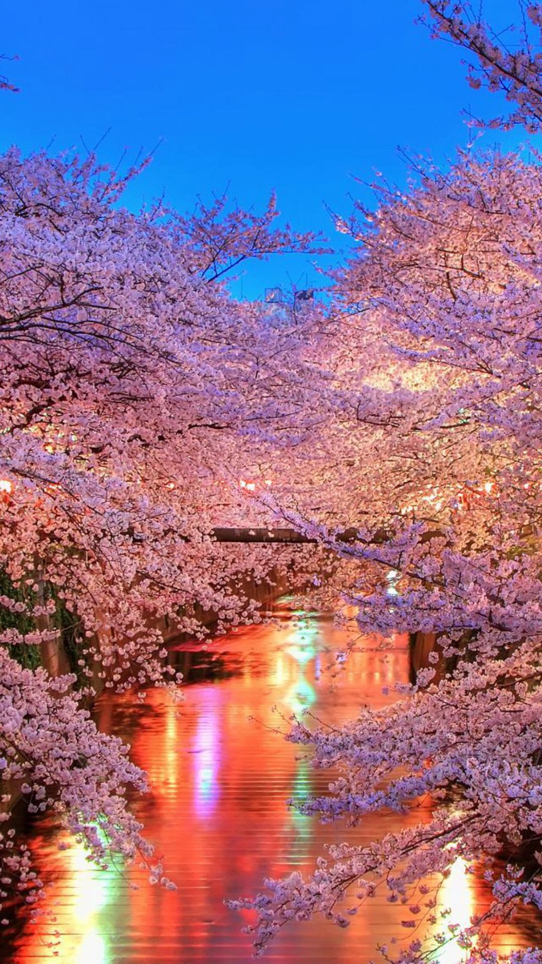 Free download hanami Blossom Sakura Japan Wallpaper ...