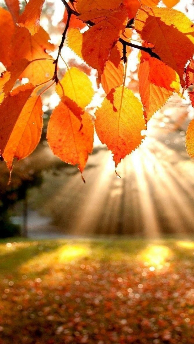 Free Download Fall Laptop Wallpapers Top Fall Laptop Backgrounds 1920x1200 For Your Desktop Mobile Tablet Explore 58 Free Fall Wallpaper Desktop Autumn Desktop Wallpaper Free Wallpapers For Desktop Free