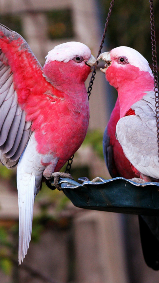 Free Download Love Birds Hd Wallpapers Beautiful Loving Birds 1920x1200 For Your Desktop Mobile Tablet Explore 74 Wallpaper Love Birds Free Wallpapers And Screensavers Birds Free Love Screensavers And