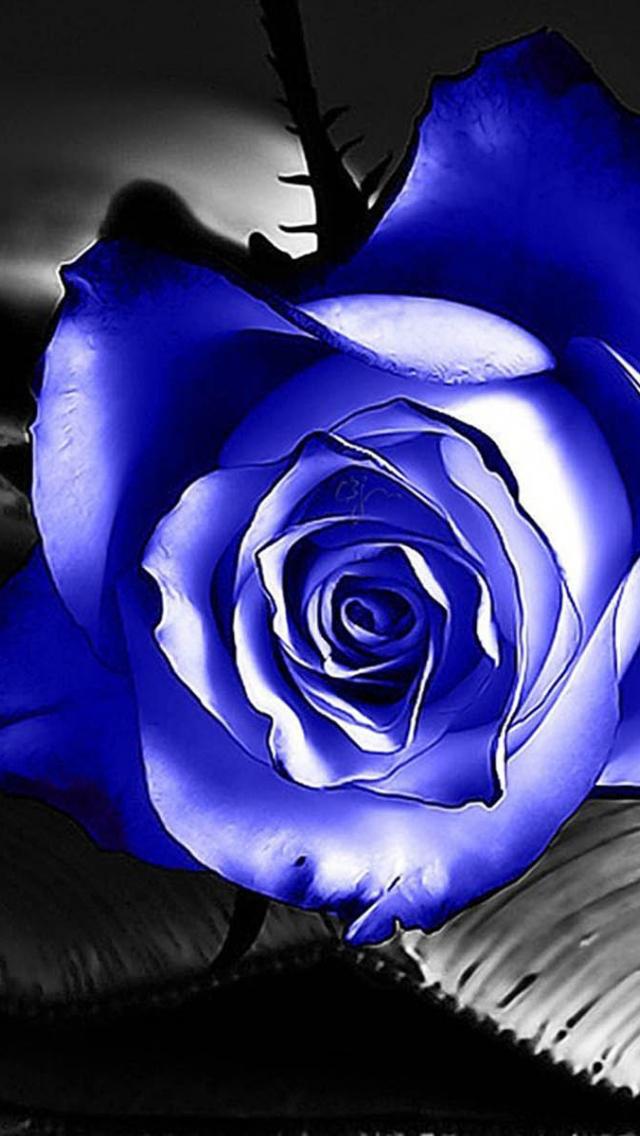 Синие розы картинки анимация