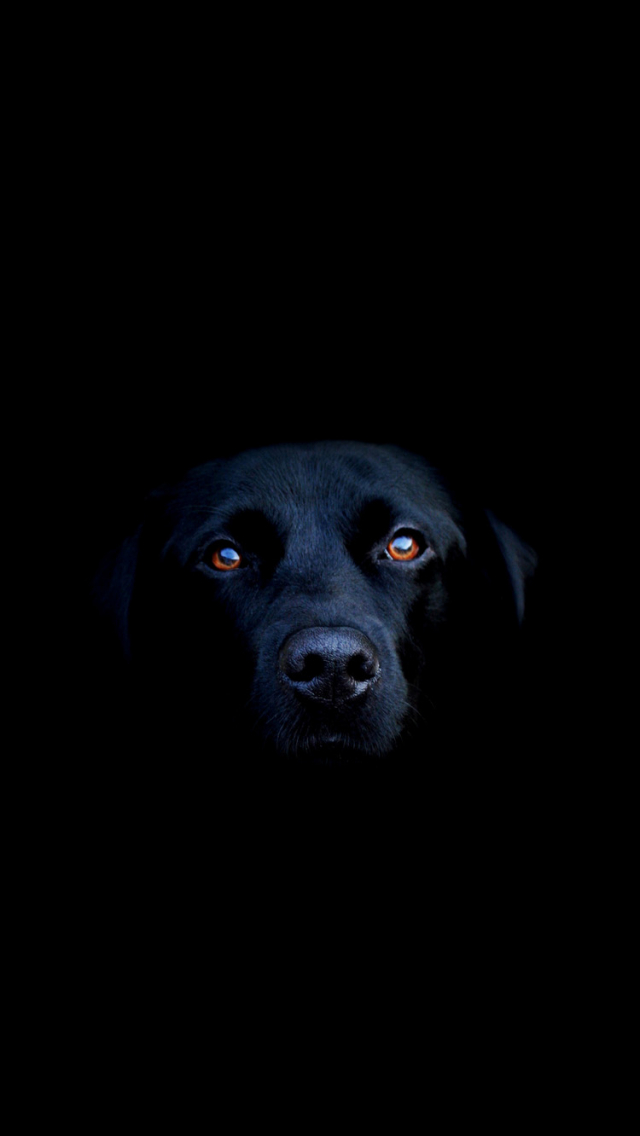 Free Download Black Dog Iphone 6 Wallpapers Hd Iphone 6 Wallpaper 750x1334 For Your Desktop Mobile Tablet Explore 44 Black Iphone 6 Wallpaper Iphone Black Wallpapers Hd Black And