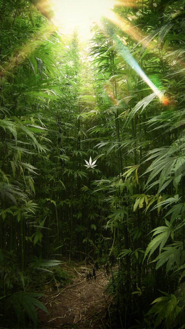 Download hf weed desktop wallpaper cannabis 01d [2800x1880 ...