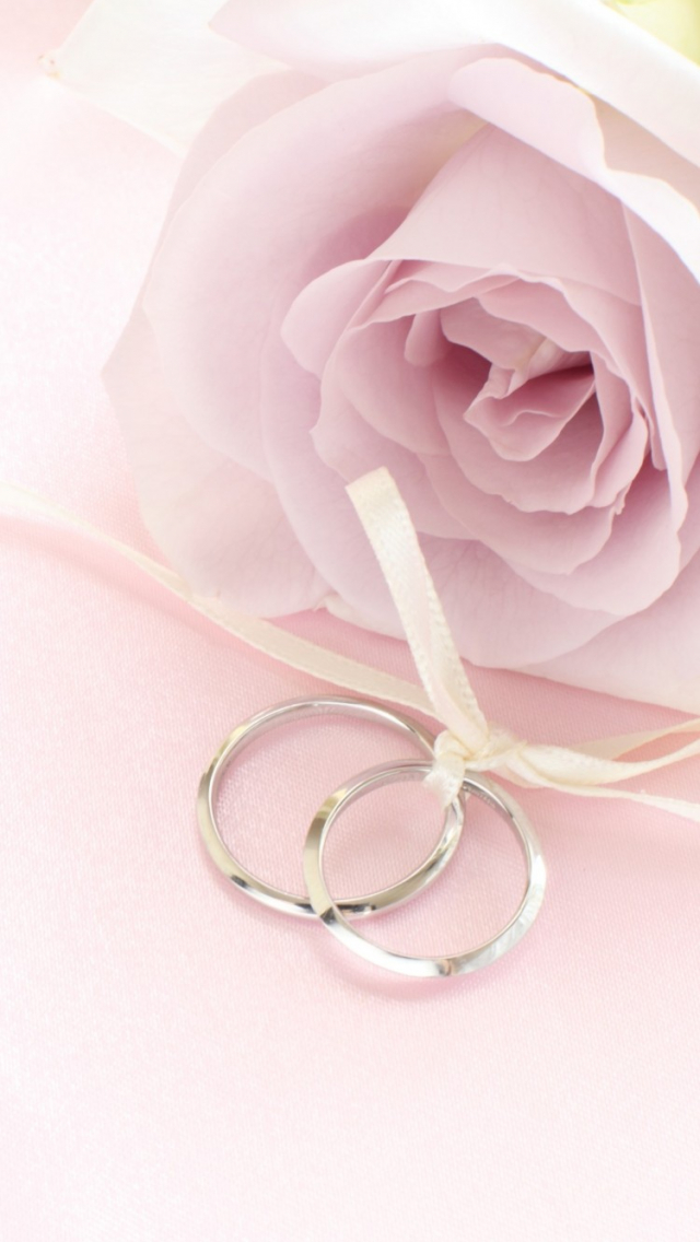 Free Download Pink Rose With Rings Wallpaper Iphone Wallpapers