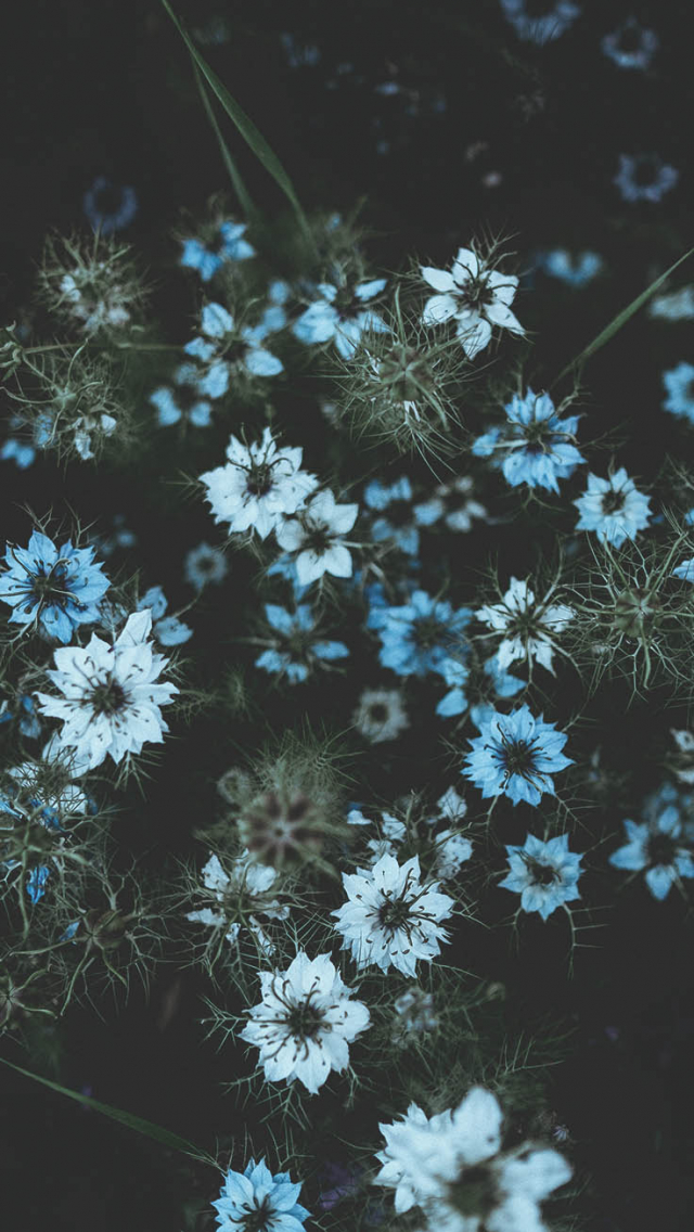 Free Download 2017 Spring Iphone Wallpaper Collection Void Aesthetic Hd 736x1308 For Your Desktop Mobile Tablet Explore 43 Aesthetic Wallpaper 2017 Aesthetic Wallpaper 2017 Aesthetic Wallpaper Aesthetic Wallpapers