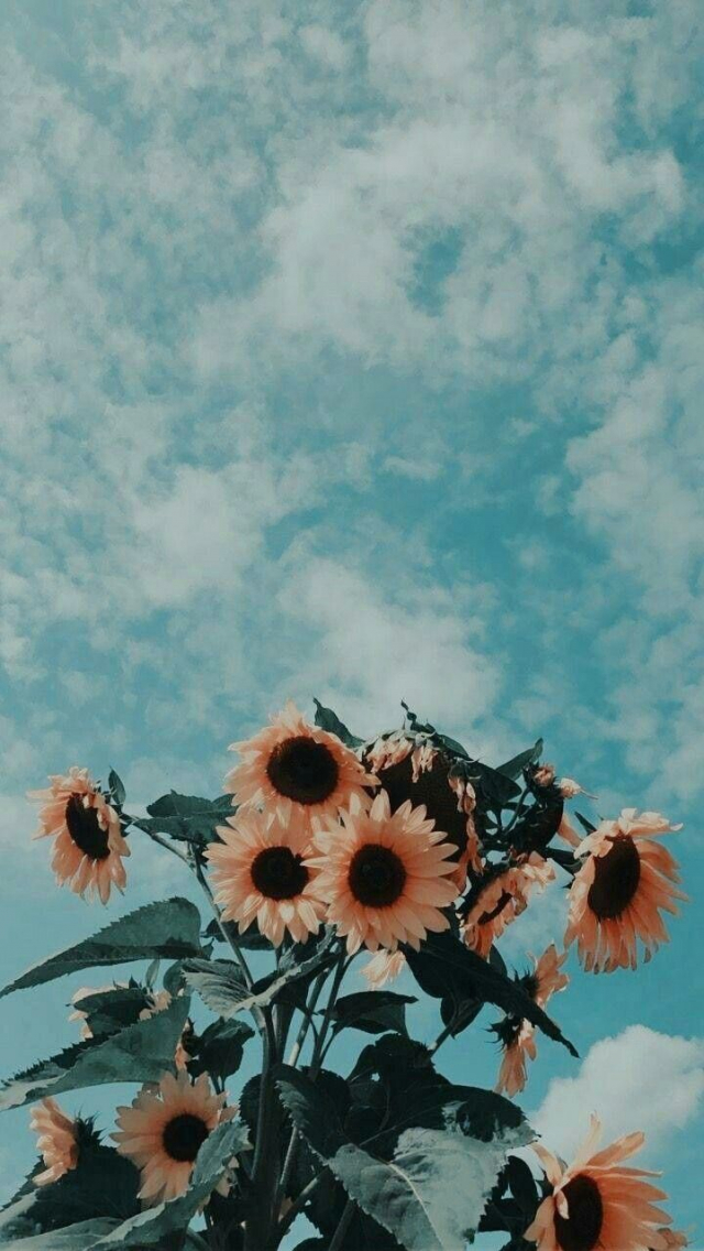 Free Download Flower Aesthetic Sky Flowers Nature Vintage Photography 720x1280 For Your Desktop Mobile Tablet Explore 48 Clouds Sunflower Aesthetic Wallpapers Clouds Sunflower Aesthetic Wallpapers Sunflower Wallpapers Sunflower Background