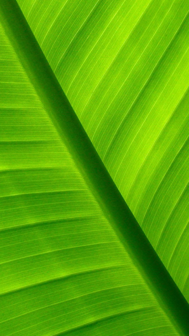 Free Download Palm Leaf Wallpaper 6285 1920x1200 For