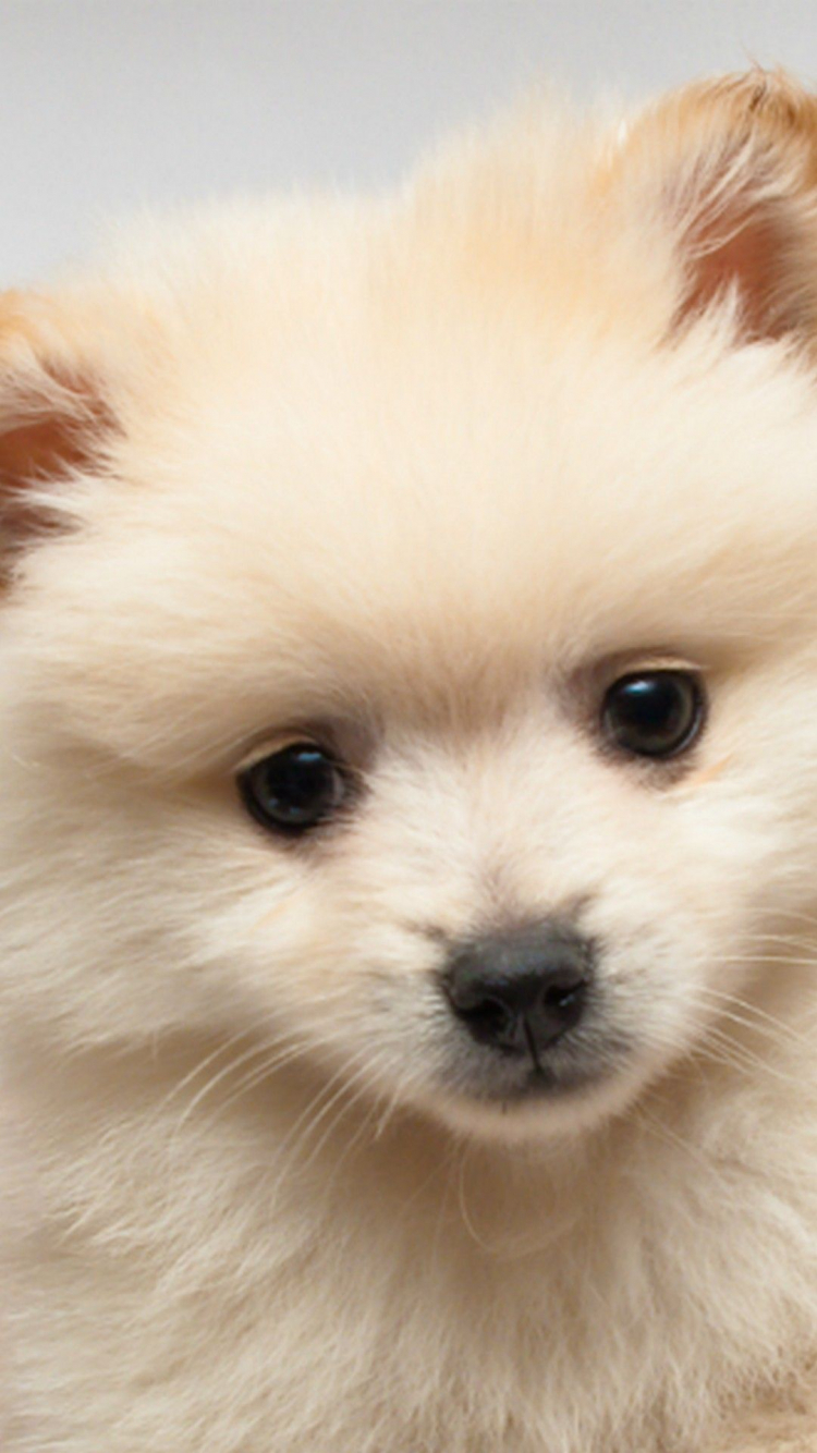 Free Download Iphone Wallpaper Cute Puppies Pictures Dog