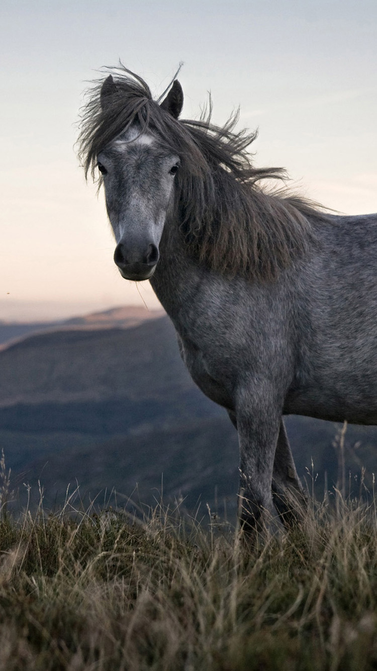 Free Download Beautiful Wild Horse Iphone 6 Wallpapers Hd