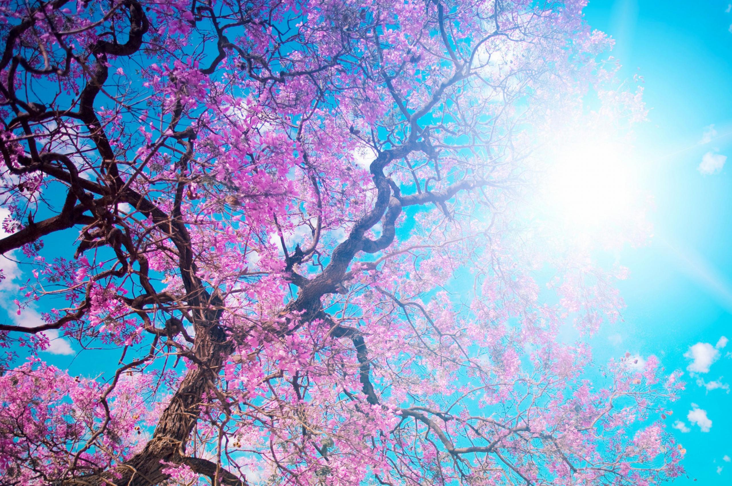 Free Download To Enjoy The Cherry Blossoms Japan Wallpaper Background 4k Ultra Hd 3840x2160 For Your Desktop Mobile Tablet Explore 46 Japan Wallpaper 4k Japanese Desktop Wallpaper 4k Nature