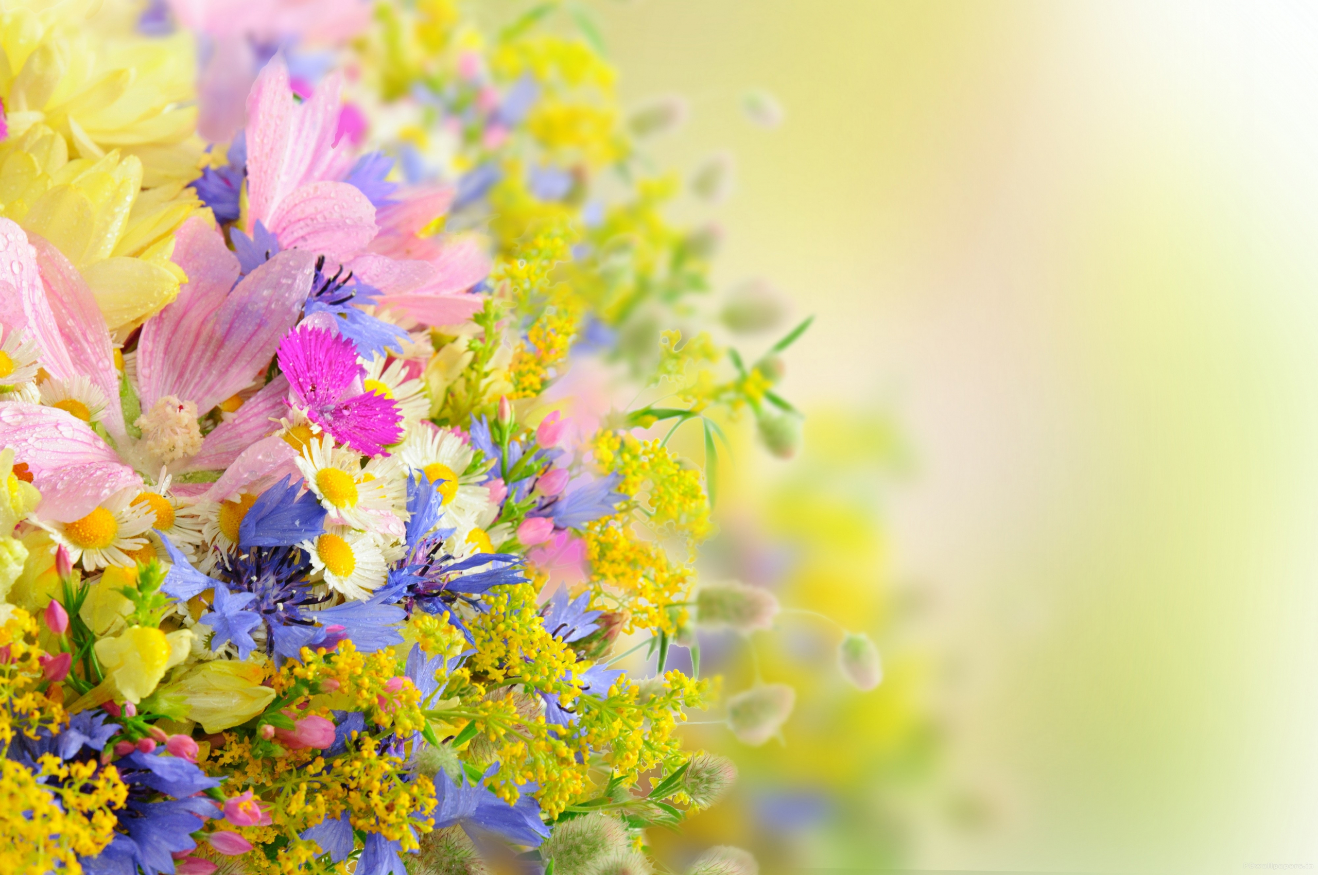 Free Download Flower Wallpaper High Resolution 4000x2657 For