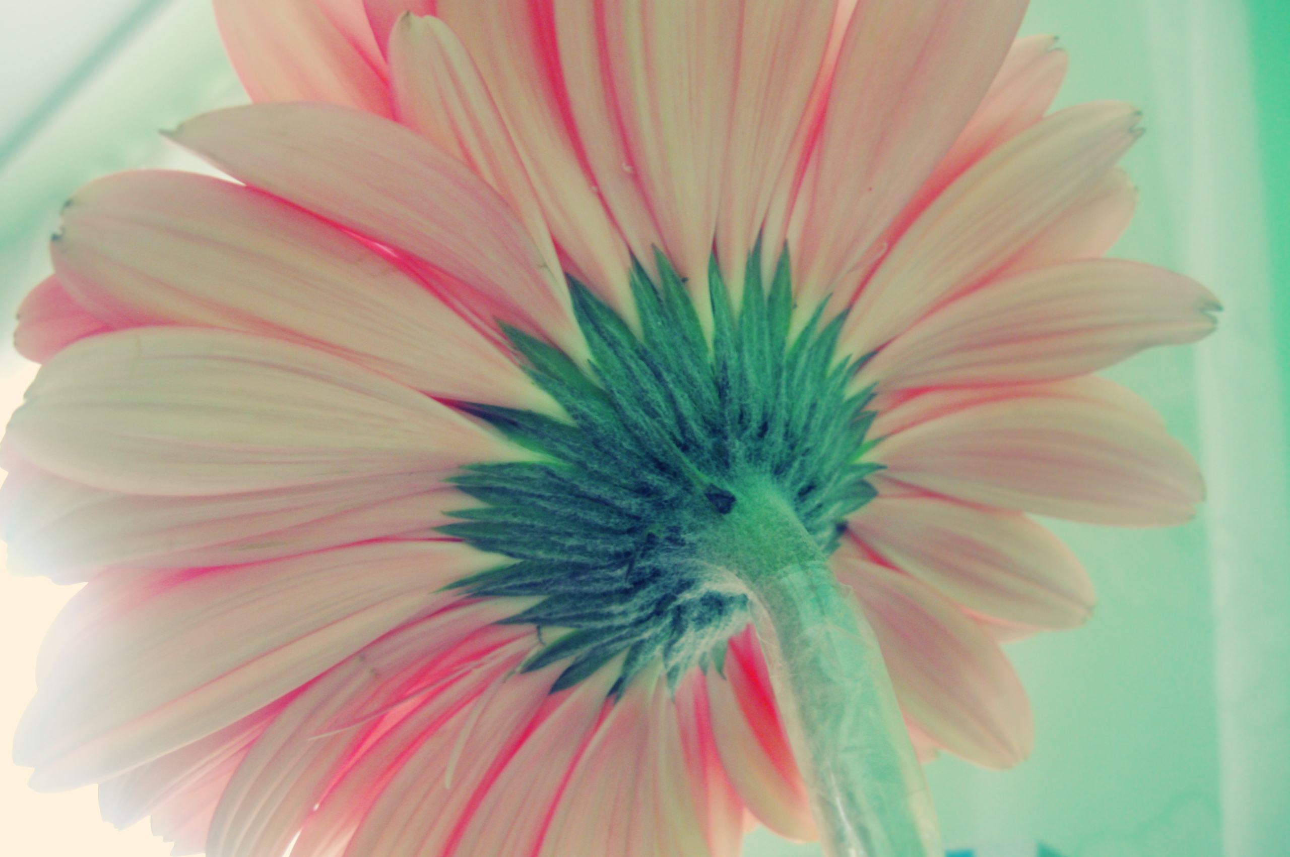 Free Download Wallpaper Abyss Explore The Collection Flowers