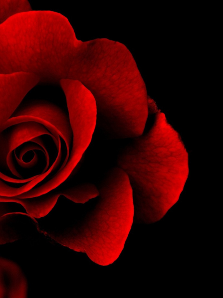 Free Download Red Rose Wallpapers Red Flowers Hd Pictures One Hd 1920x1080 For Your Desktop Mobile Tablet Explore 54 Red Flower Black Background Red Flower Black Background Red Flower