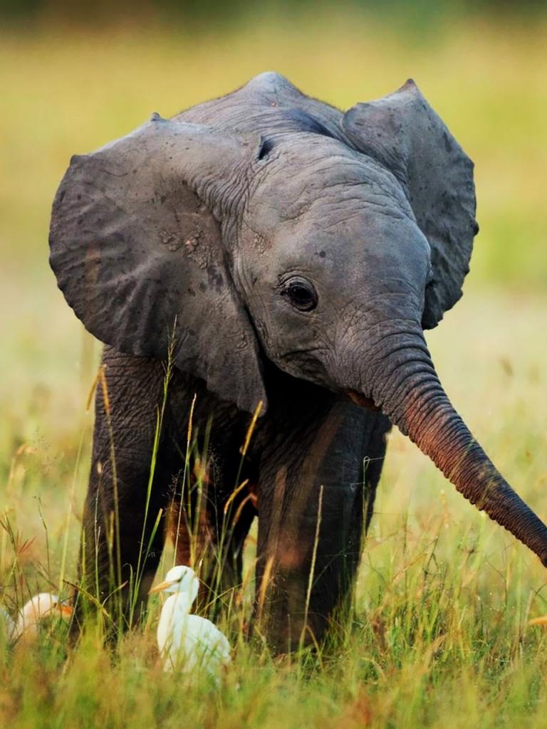 Free baby elephant 1600x1280 Screensaver