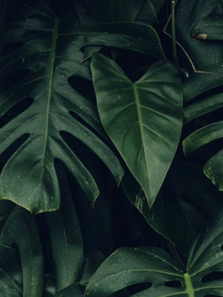 Free Download Palm Leaves Hawaii Aesthetic Tropical Plants Plantspo 772x1186 For Your Desktop Mobile Tablet Explore 34 Wallpaper Aesthetic Green Wallpaper Aesthetic Green Aesthetic Green Pc Wallpapers Aesthetic Wallpaper