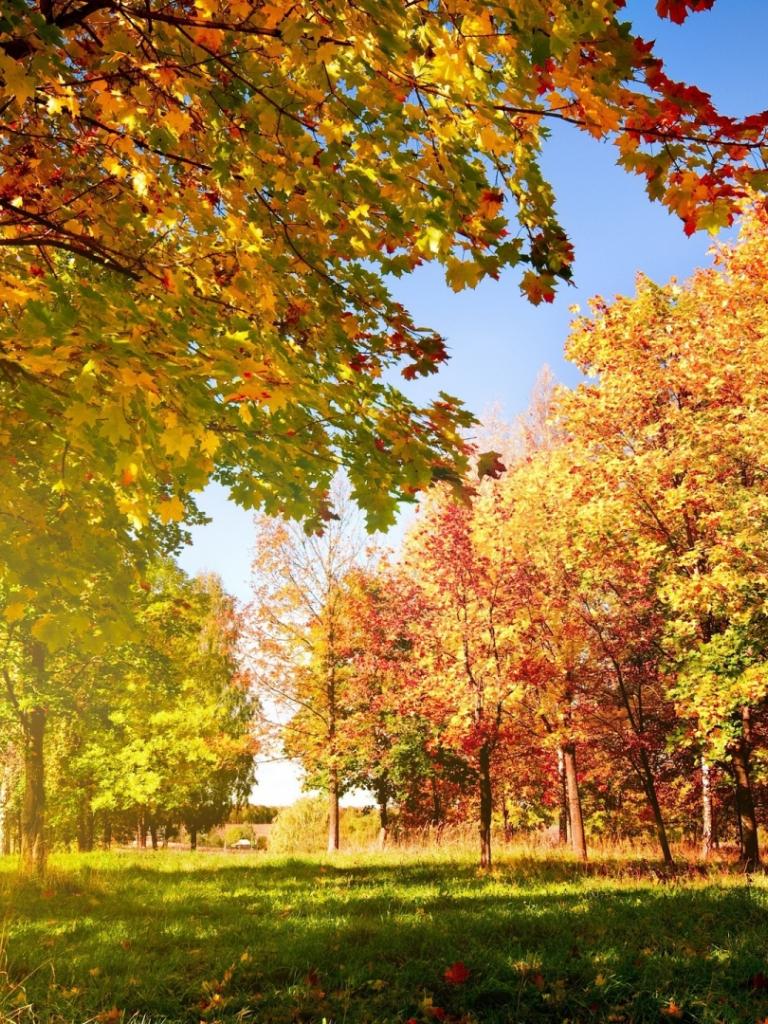 Free download colorful autumn landscape autumn leaves ...