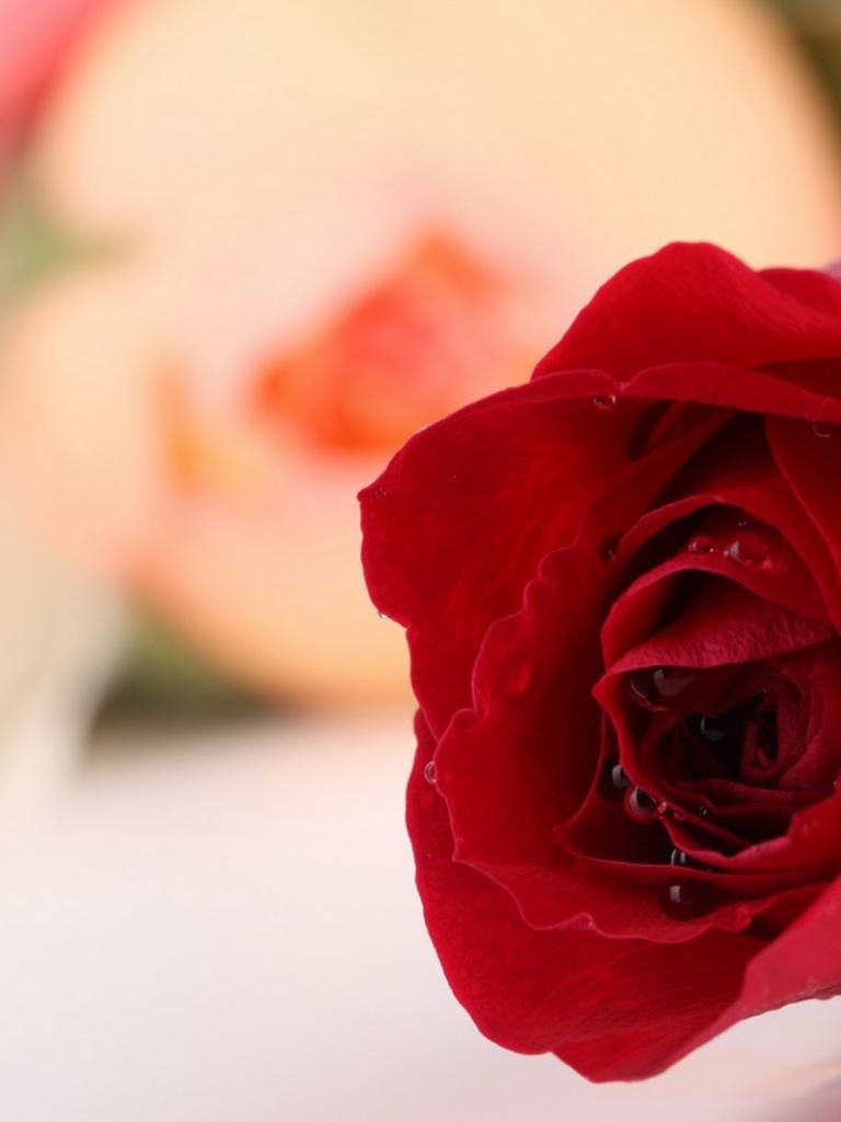 Unduh 55+ Wallpaper Bunga Mawar Bergerak HD Gratid