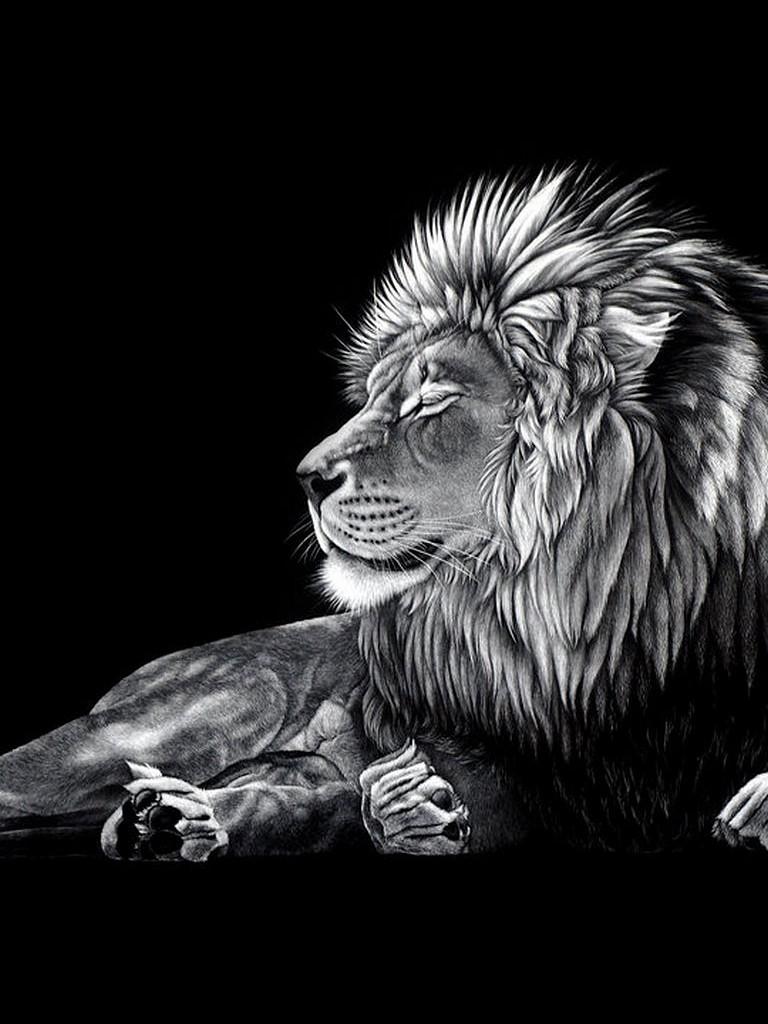 Free Download Black Lion Hd Wallpapers Black Lion Hd Wallpapers Black Lion 1280x1024 For Your Desktop Mobile Tablet Explore 44 Black Lion Hd Wallpaper Os X Wallpaper Detroit Lions