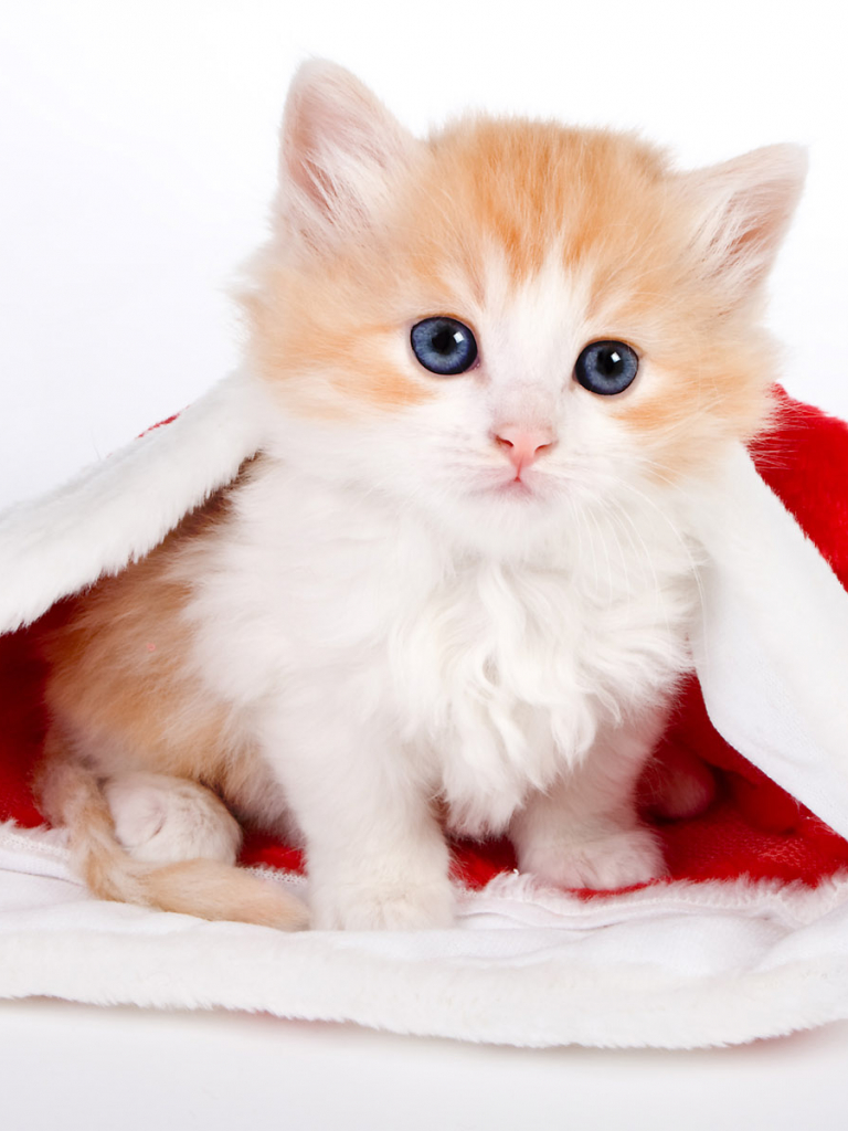 Free Download Cute Cat Wallpapers Cute Cat Desktop Wallpaper Cat Desktop 1920x1200 For Your Desktop Mobile Tablet Explore 72 Cute Background Pictures Cute Wallpapers For Laptops Cute Wallpapers For Girls