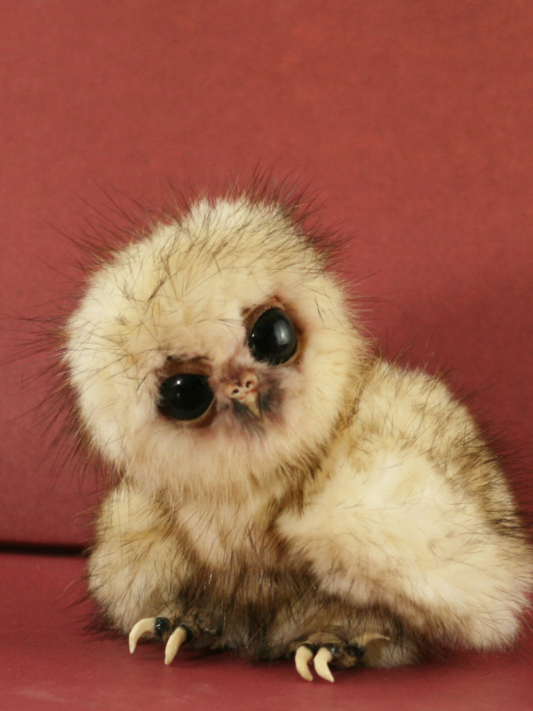 Free Download Cute Baby Owls Cute Owls Cute Baby Owls Cute Baby Owls Baby Owls Funny 1125x1114 For Your Desktop Mobile Tablet Explore 39 Cute Baby Owl Wallpaper Owl