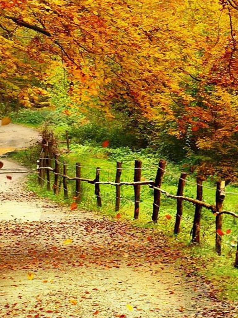 Free download Beautiful Autumn Scenery Wallpapers Full Hd ...