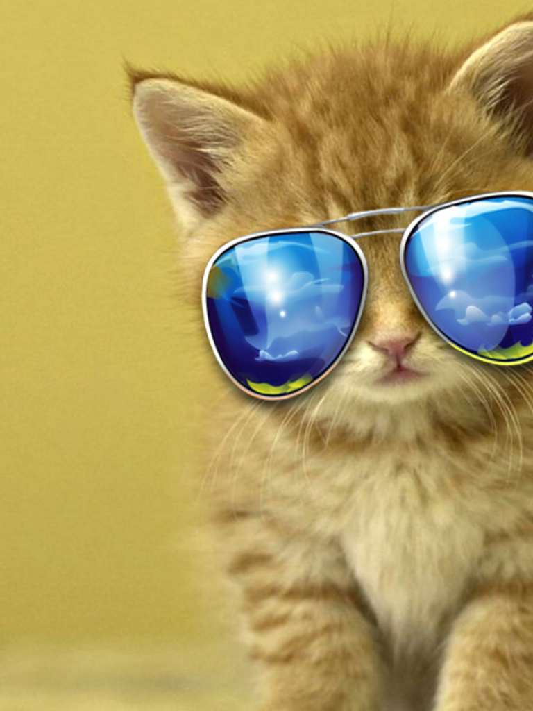 Free Download Cool Cat Hd Wallpaper Background Images 2560x1600 For Your Desktop Mobile Tablet Explore 29 Cool Cats Wallpapers Cool Cats Wallpapers Cats Wallpaper Wallpaper Cats