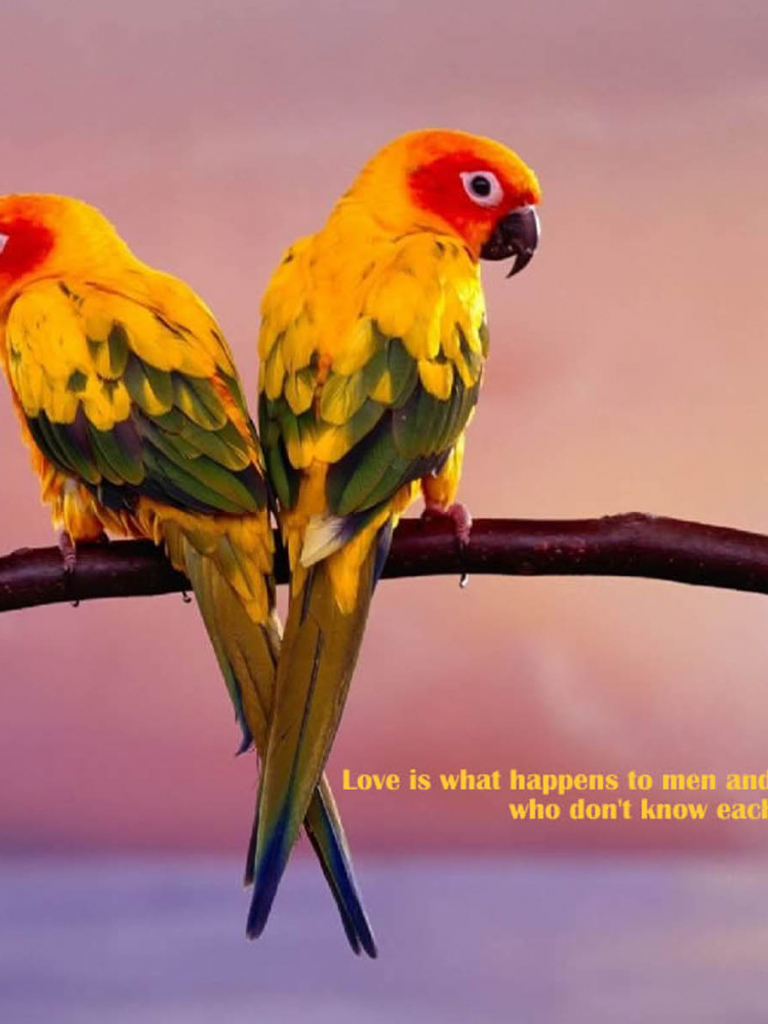 Free Download Tag Love Birds Wallpapers Backgrounds Photosimages And Pictures 1600x1200 For Your Desktop Mobile Tablet Explore 73 Wallpapers Of Love Birds Free Wallpapers And Screensavers Birds Free Love