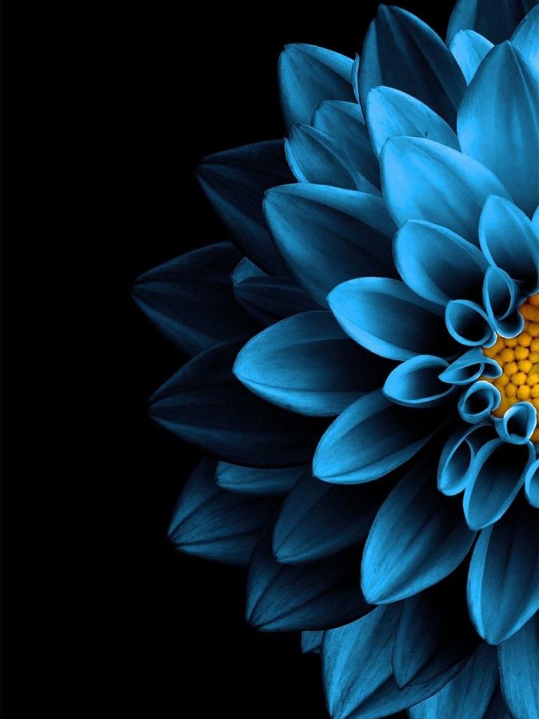 Free Download Blue Flower Nature In 2019 Black Background Wallpaper Flower 1080x1703 For Your Desktop Mobile Tablet Explore 48 Samsung S8 Wallpaper Lock Screen Samsung S8 Wallpaper Lock Screen