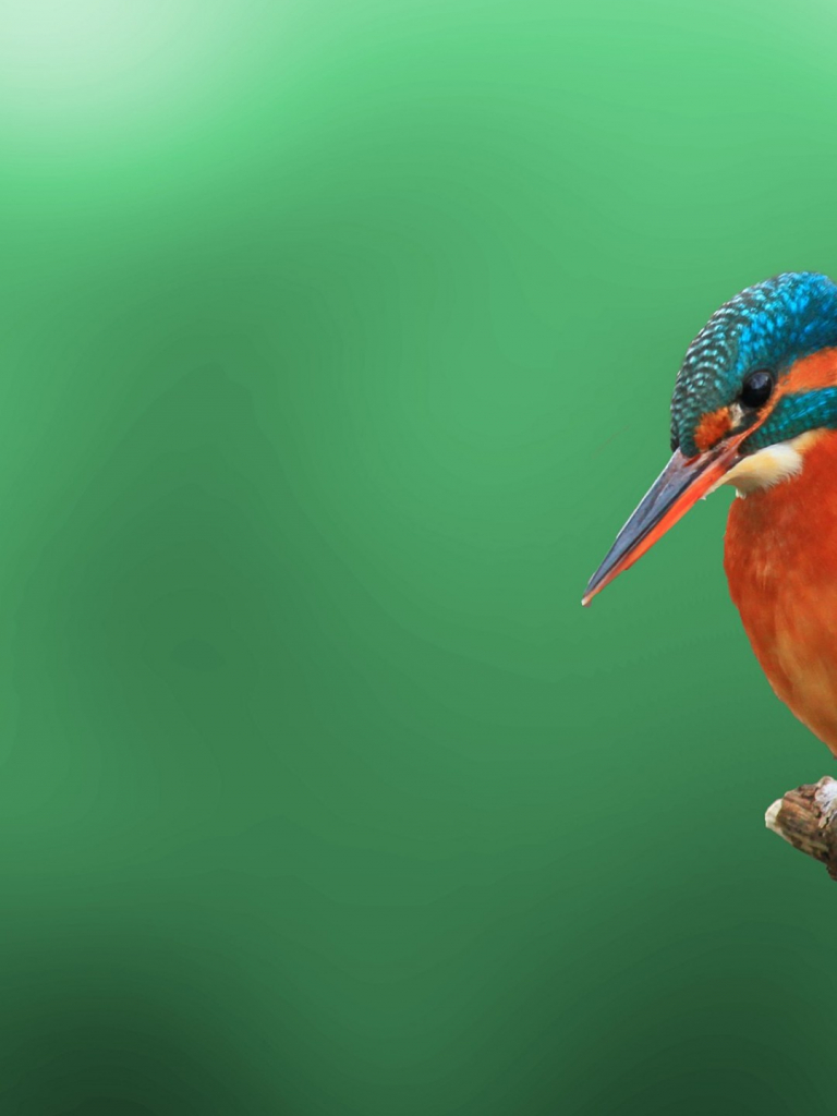 Free Download Kingfisher Bird 4k Hd Wallpaper Iphone 6 6s Plus Hd Wallpaper 1080x1920 For Your Desktop Mobile Tablet Explore 60 Iphone 6s Plus 4k Wallpapers Iphone 6s Plus