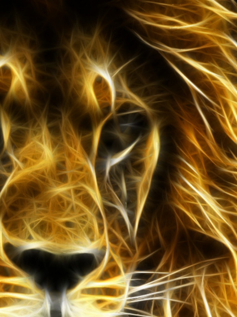 Free download Lion Wallpapers Best Wallpapers [1920x1080