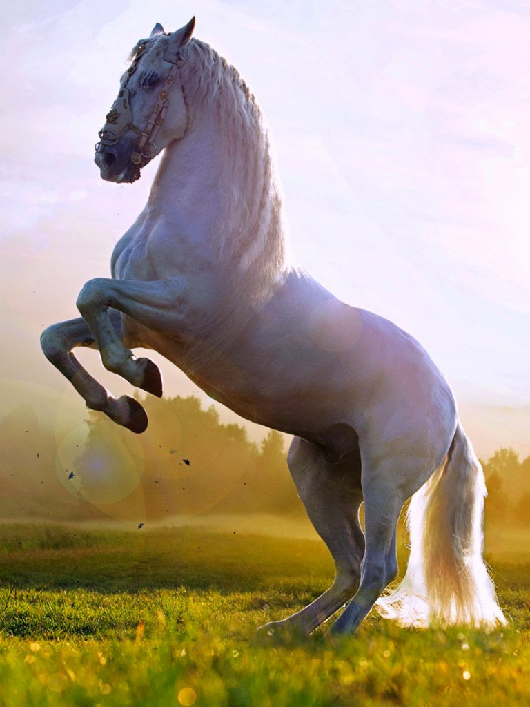 Free Download Beautiful White Horse Standing Up Wallpaper Hd 1080p