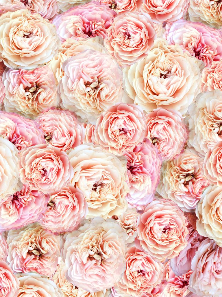 Free Download Peony Wallpaper Iphone Viewing Gallery 1024x1024 For Your Desktop Mobile Tablet Explore 66 Peonies Wallpaper Watercolour Wallpaper