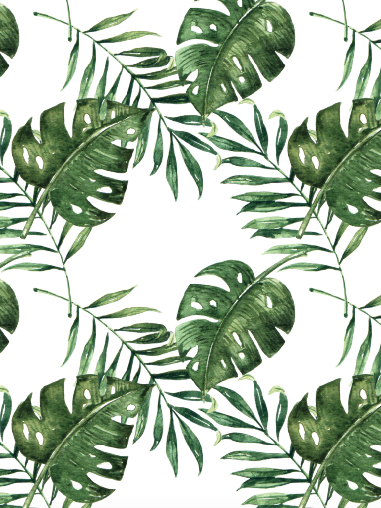 Free Download Palm Leaf Wallpaper Wallpaper Tropical Leaves Hd 1007x1024 For Your Desktop Mobile Tablet Explore 60 Tropical Wallpaper Free Tropical Beach Screensavers And Wallpaper Beach Wallpaper For Computer Pngkit selects 117 hd tropical leaves png images for free download. free download palm leaf wallpaper