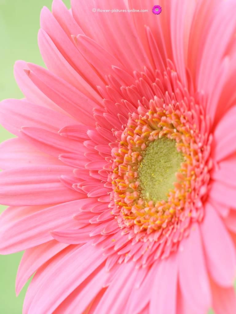 Free Download 17097 Flower Wallpaper For Computer Desktop 1280x1024 For Your Desktop Mobile Tablet Explore 70 Spring Flowers Computer Desktop Wallpaper Free Spring Flower Wallpaper