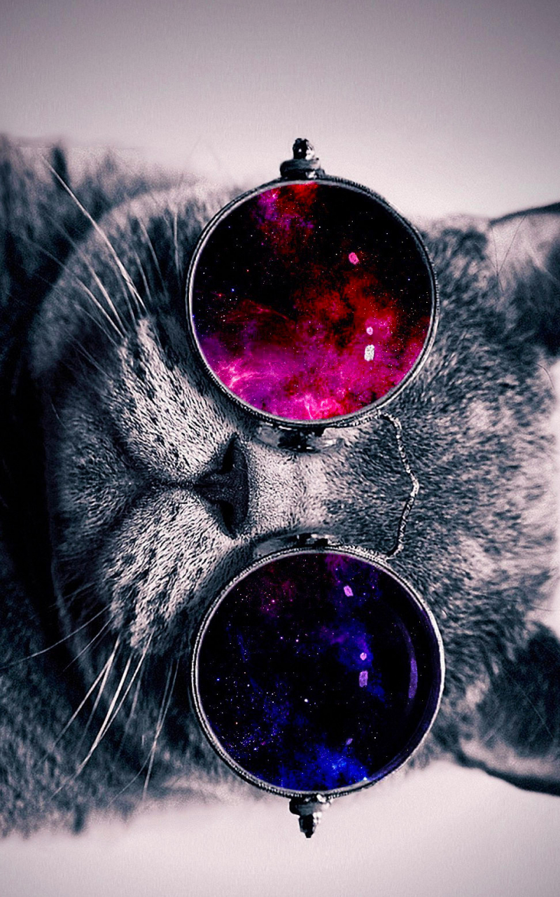 Space Cat Wallpaper 1783526 Source 972x1656px Animals With Glasses WallpaperSafari