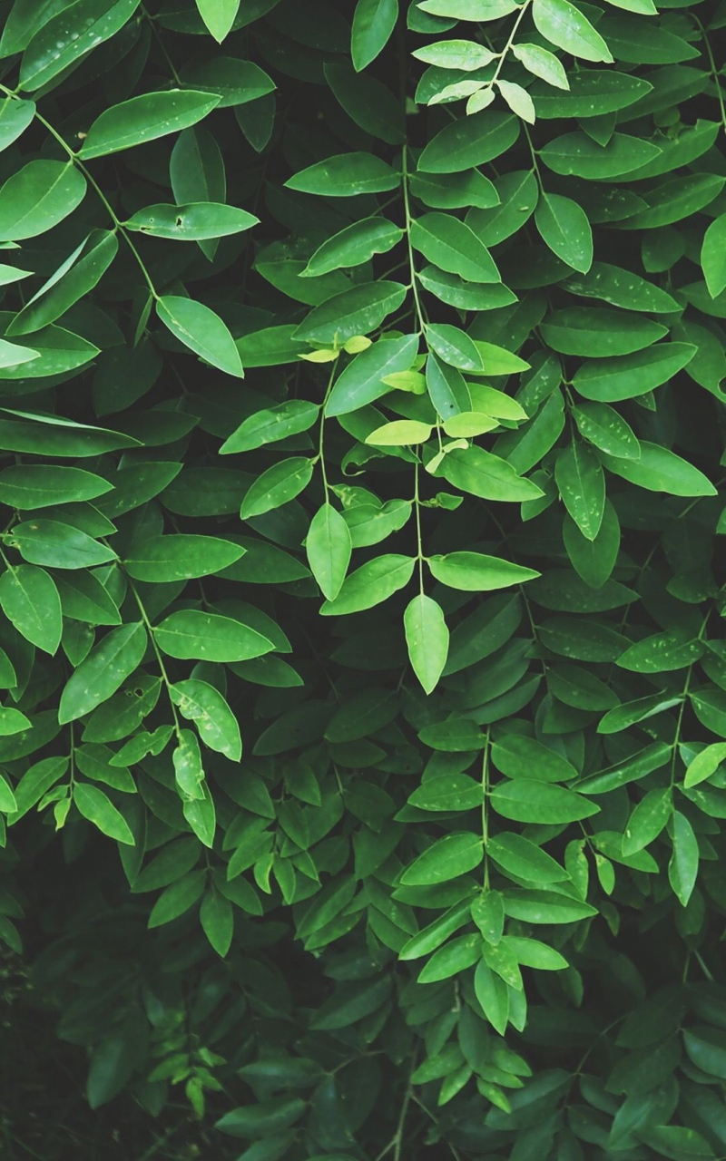 Free Download Leaf Wallpaper Green Aesthetic Nature Aesthetic Green 1080x1920 For Your Desktop Mobile Tablet Explore 34 Wallpaper Aesthetic Green Wallpaper Aesthetic Green Aesthetic Green Pc Wallpapers Aesthetic Wallpaper